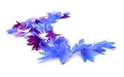 Photo manipulation oil paint blue cornflower  isolated Royalty Free Stock Image