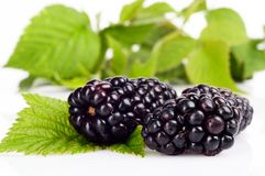 Photo many blackberries with leaves white background Stock Photos