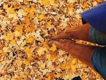 Standing in Fall Leaves stock images
