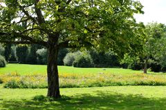 Photo of a meadow of wild flowers with tree in the foreground, taken on a sunny day in midsummer in Eastcote, UK. Photo of a field of wild flowers with tree in Royalty Free Stock Image