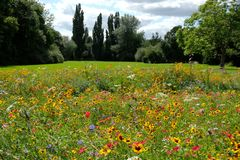 Photo of a meadow of colorful wild flowers, taken on a sunny day in midsummer in Eastcote, UK