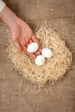 Photo of men hand putting one white egg in the nest Stock Photos