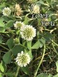 Photo mignonne blanche de fleur avec l'article de ` de ` je t'aime Photos libres de droits