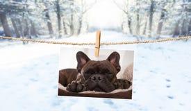 Photo mignonne de chien sur la ficelle en hiver Photos stock
