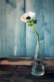 Fleur d'anémone Photo libre de droits