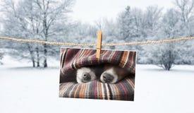 Photo mignonne des chiens sur la ficelle en hiver image libre de droits