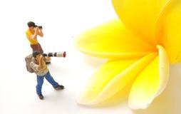 Top View Photo 2 Mini Figure Photographer toy standing taking Picture a big yellow white beautiful frangipani royalty free stock photo