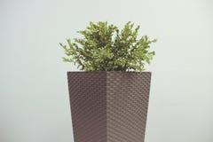 Photo minimalistic de planteur dans des tons amortis Photographie stock