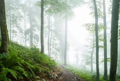 Photo of misty forest with trees, plants, fern. Summer evening Royalty Free Stock Images