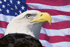 Photo montage: American flag and bald eagle Stock Photography