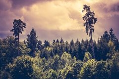 Dramatic sky and forest. Photo of a moody sky over a thick forest in the early evening Royalty Free Stock Photos