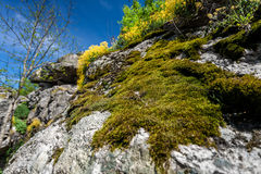 Photo of moss growing on mountain Royalty Free Stock Photos