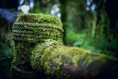 Moss on woods and rope Stock Image