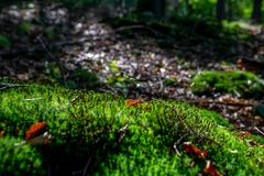 Mossy green meadow in autumn forest with sunlight royalty free stock photography