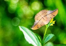 A moth hiding under daisy family flower royalty free stock photo