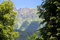 Photo of mountain through green trees. Summer Royalty Free Stock Images