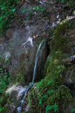 Photo of a mountain stream. The photo of a mountain stream Royalty Free Stock Images
