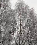 Winter season. Photo Royalty Free Stock Photography