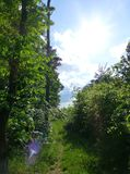 Narrow forest path surrounded by lush vegetation. Photo of a narrow forest path surrounded by lush vegetation Royalty Free Stock Images