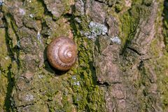 Photo of a natural still life shell of a snail stock photo