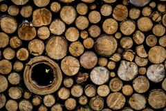 Photo of natural wood Royalty Free Stock Photography
