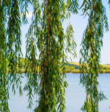 Photo of nature around beautiful blue lake. At summer Stock Images