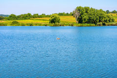 Photo of nature around beautiful blue lake. At summer Royalty Free Stock Photo