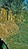 Photo naturelle de stayl de palladium Photo libre de droits