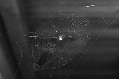 Photo naturelle de toile d'araignée Photo stock