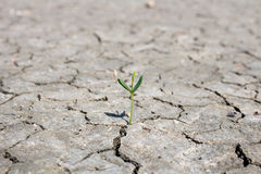 Photo new life plant dry areas, Concept and Ideas About Drought.  Stock Image