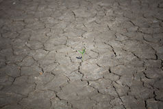 Photo new life plant dry areas, Concept and Ideas About Drought Stock Photography