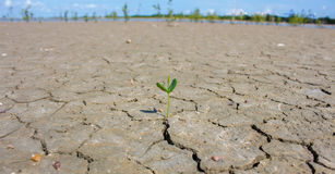 Photo new life plant dry areas, Concept and Ideas About Drought Royalty Free Stock Image