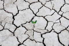 Photo new life plant dry areas, Concept and Ideas About Drought Stock Photo
