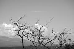 Photo noire et blanche d'arbres à feuilles caduques avec des nuages à l'arrière-plan Photos libres de droits