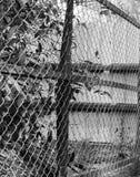 PHOTO NOIRE ET BLANCHE DE BARRIÈRE DE CHAIN-LINK Photo libre de droits