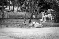 Photo noire et blanche de deux chiens Photographie stock libre de droits