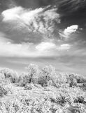 Photo noire et blanche de forêt d'hiver Images libres de droits