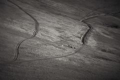 Photo noire et blanche de frôler des chevaux Photos libres de droits