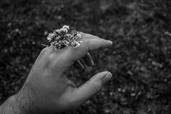 Photo noire et blanche de main tenant des fleurs image stock