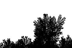 Photo noire et blanche des arbres sur le ciel blanc clair Utilisation pour le concept de la mort, de deuil et de tristesse images stock