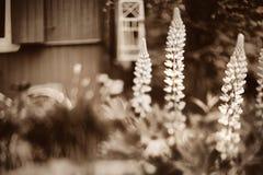 Photo nostalgique de vintage de la maison de campagne de l'enfance images stock