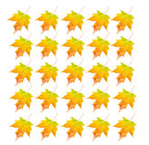 Photo Object - Autumn Leaf. Autumn colored leaves. Pattern isolated on white Stock Images