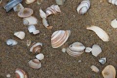 Free Photo Of Molluscs Shell On A Coast Royalty Free Stock Photos - 129383128