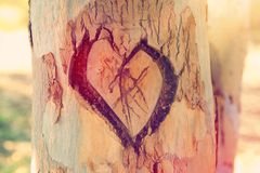 Photo Of Old Tree Trunk With Heart Carved On It. Valentine& X27;s Day Concept. Romantic Background. Stock Image
