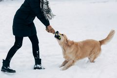Photo Of Woman Playing With Labrador In Winter Park Stock Photography