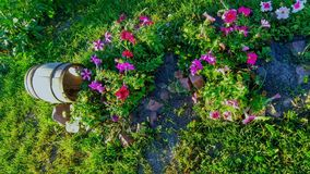 Decorative barrel with flowers stock image