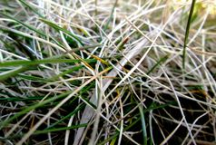 Old grass. Photo of an old grass detail Stock Photography