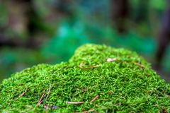 Photo of old stone with moss in Carpathian mountains Stock Photography