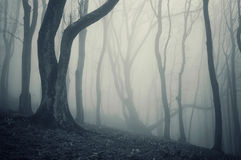Photo of an old tree in a cold forest with fog. An old tree in a cold foggy forest on a rainy day Stock Photo