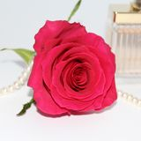 In the photo one red roses, perfume, and pearls royalty free stock photo